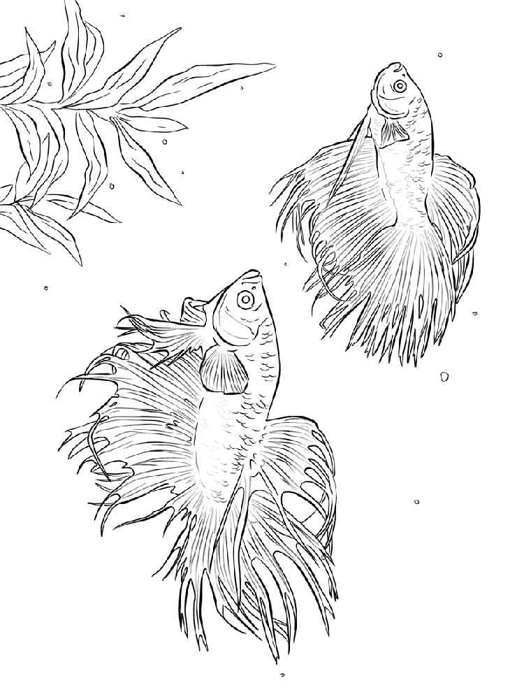 750x1000 Betta Fish Coloring Pages Download And Print Betta Fish Coloring