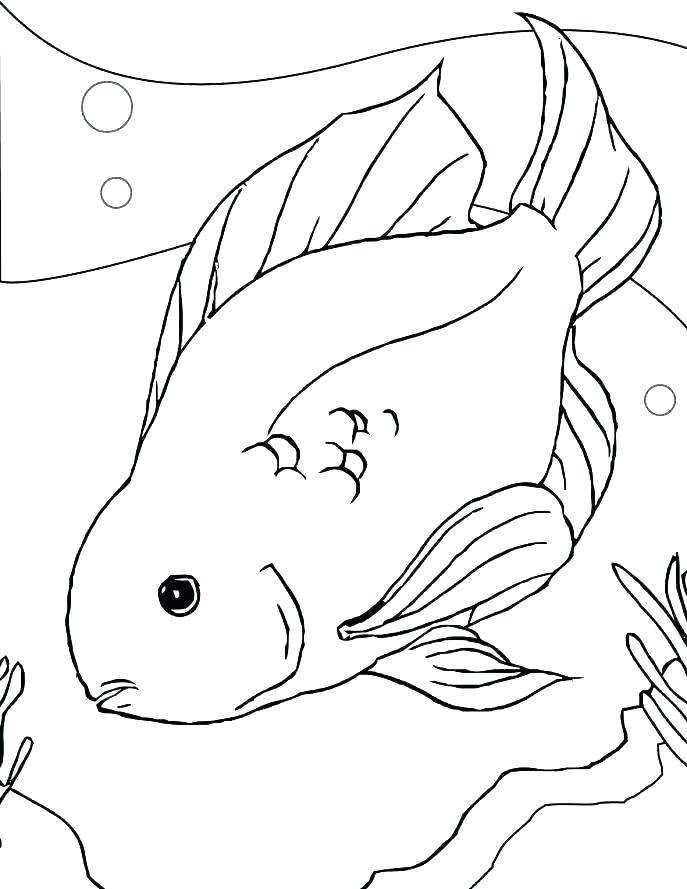687x889 Betta Fish Coloring Page Coloring Page Fish Coloring Page