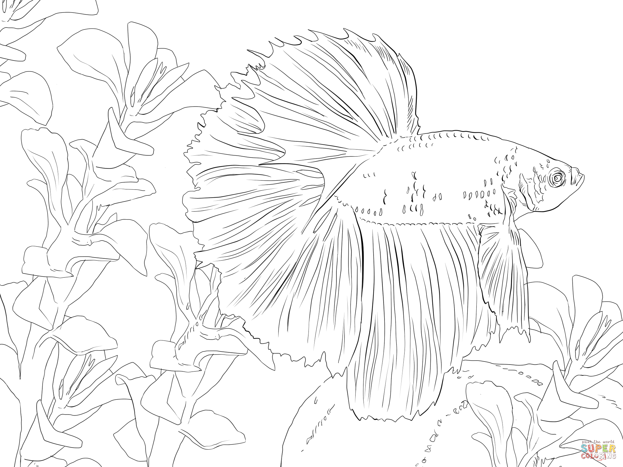 2048x1536 Betta Fish Coloring Pages Betta Fish Coloring Online Coloring