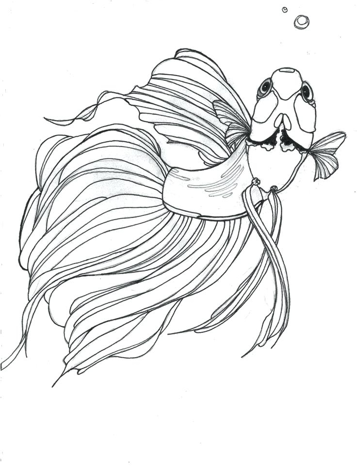 736x976 Betta Fish Coloring Page Drawn Fish Beta Fish Betta Fish