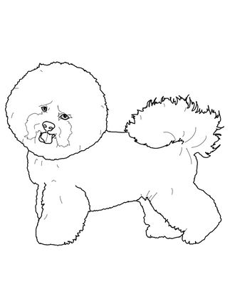 Bichon Frise Coloring Pages