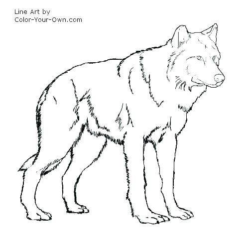 500x500 Wolf Pictures To Color Together With Howling Wolf Coloring Pages