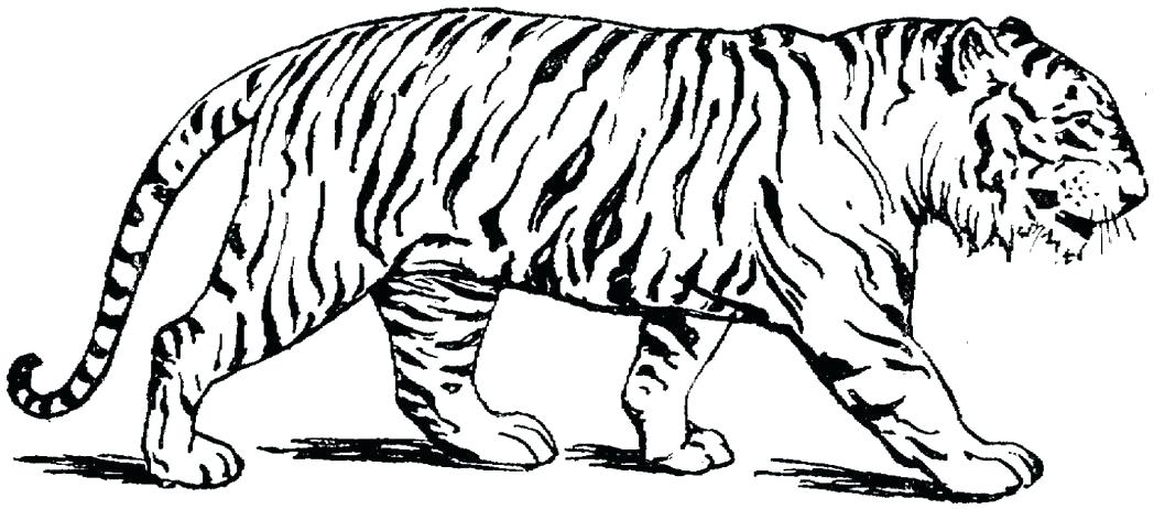 1048x462 Awesome Big Cat Coloring Pages Coloring For Sweet Coloring Page