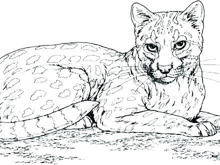 440x330 Big Cat Coloring Pages Jaguar Big Cat Coloring Page Big Cat Rescue
