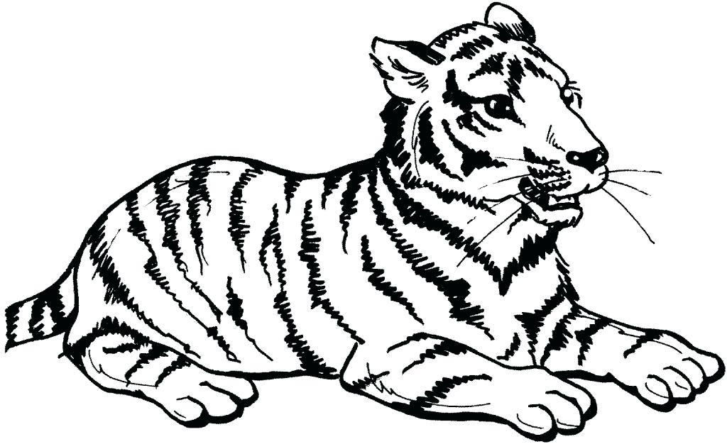 1024x626 Big Cat Coloring Pages Big Cat Coloring Pages Big Cat Rescue