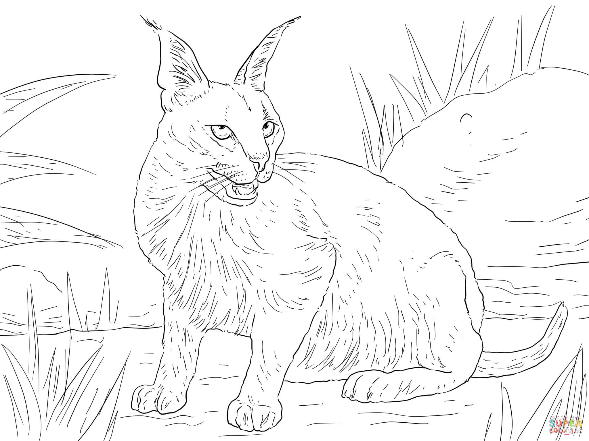2048x1536 Marvelous Big Cat Coloring Pages Of Realistic Wild Trends