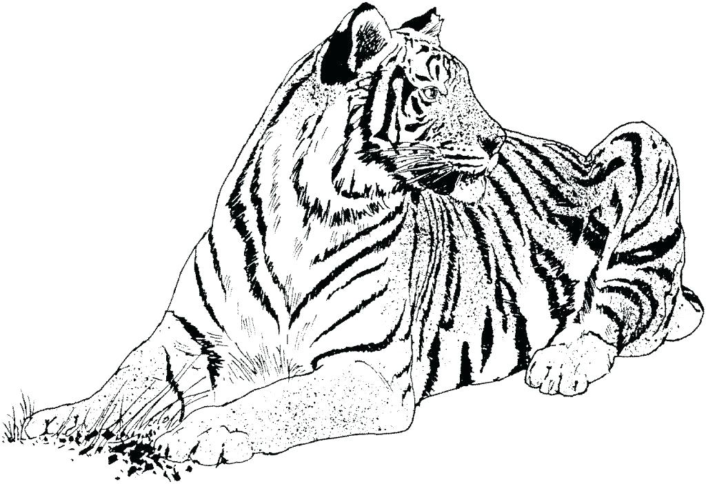 1024x702 Realistic Bird Coloring Pages Realistic Coloring Pages Big Cat