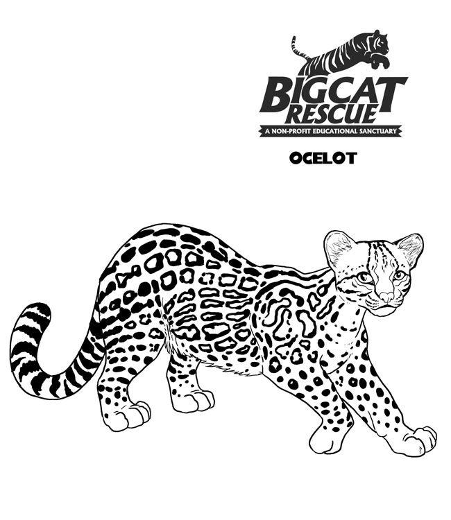 650x750 Big Cat Pictures To Color Fun Cat Big Cat Rescue
