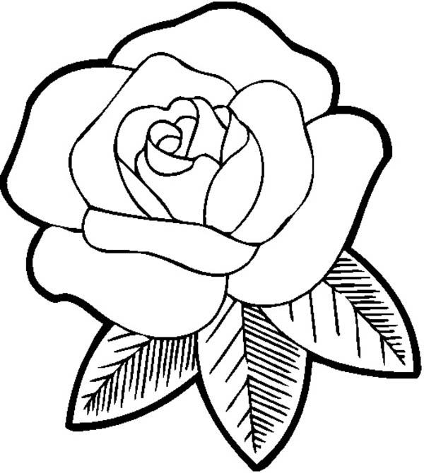 600x670 Big Beautiful Rose Coloring Page