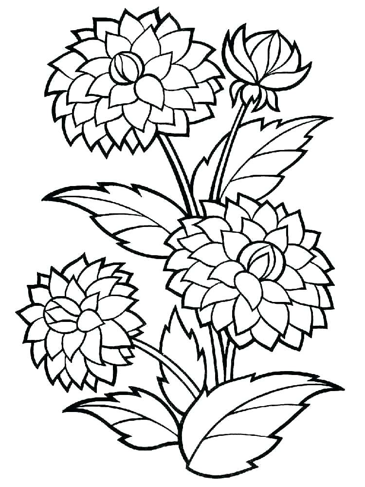 750x1000 Big Flower Coloring Sheets Pages Page Dahlia Mandala Diff