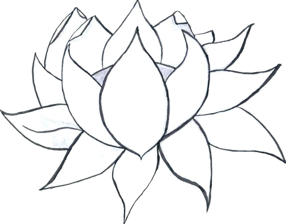 970x761 Big Cactus Flower Coloring Pages Best Place To Color Big Flower