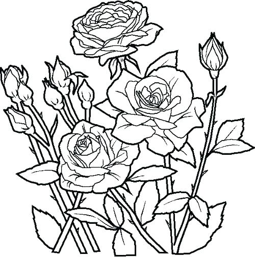 500x503 Flower Pot Coloring Pages Flower Coloring Pages Free Printable