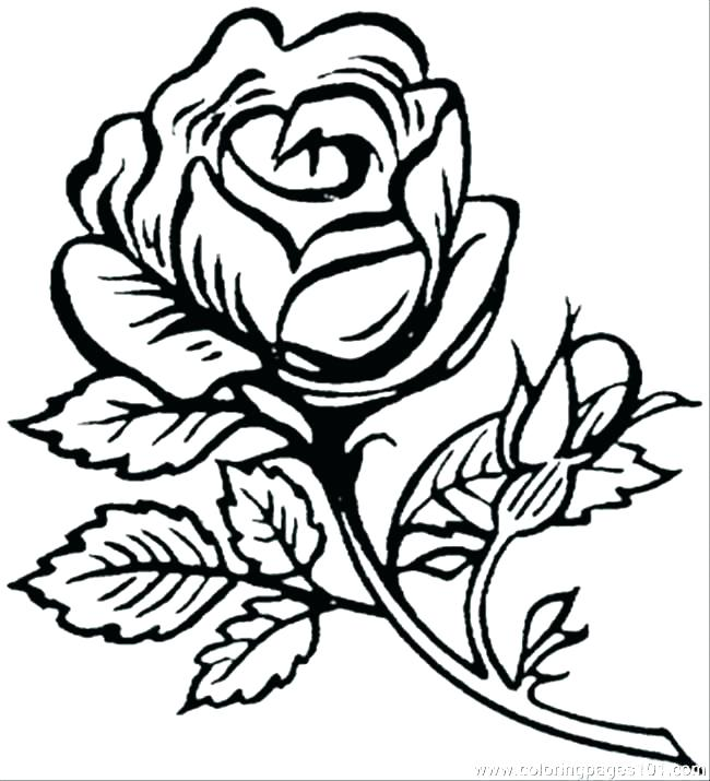 650x715 Flowers Colouring Pages Printable Big Flower Coloring