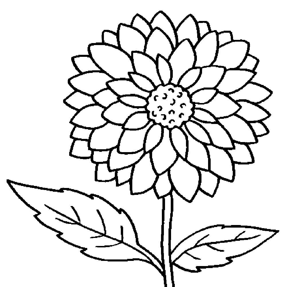 1000x1000 Incredible Big Flower Coloring Sheet Pics Of Large Pages Styles