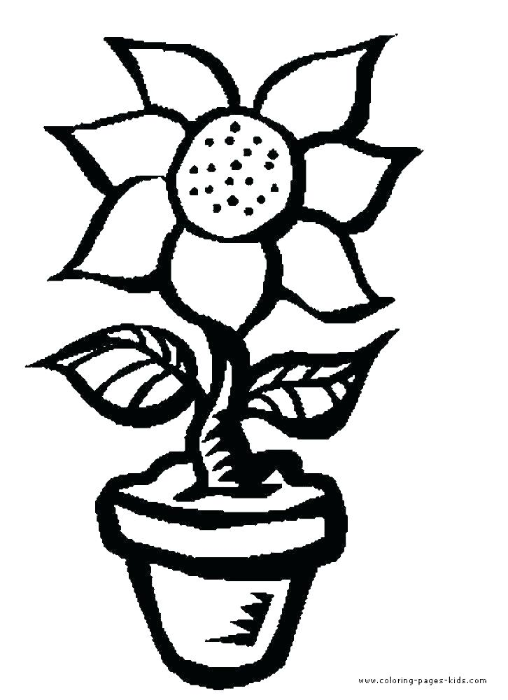 726x1000 Large Flower Coloring Pages Perfect Flower Color Pages About Large