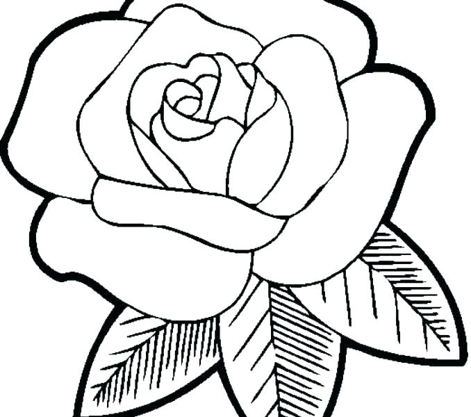 678x600 Flower Coloring Pages Printable