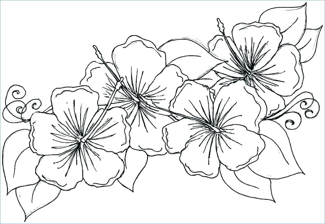 1043x721 Big Flower Coloring Pages Coloring Pages Flowersnd Hearts