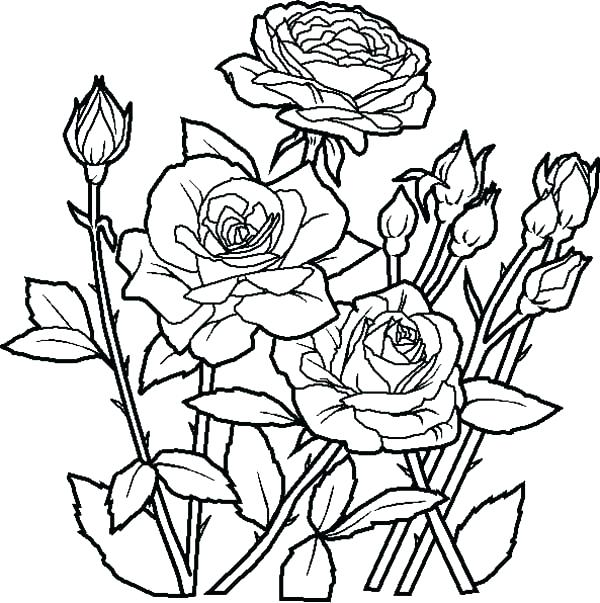 600x603 Big Flower Coloring Pages Coloring Pages Of Roses And Flowers