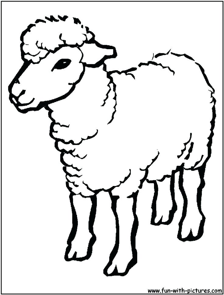 736x966 Coloring Pages Of Sheep Sheep Outline Drawing Coloring Page Sheep