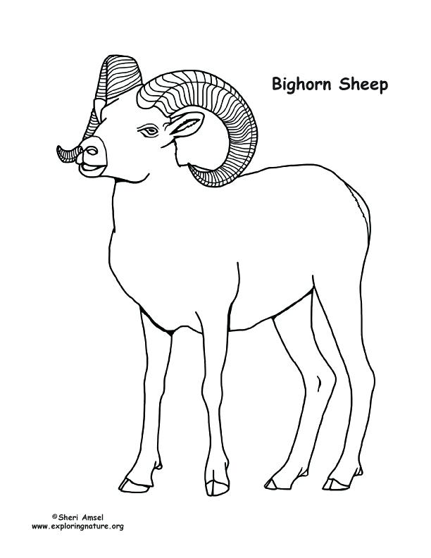 612x792 Sheep Coloring Page Sheep Coloring Pages Preschool