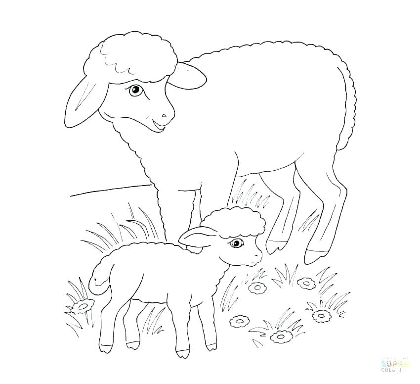 850x776 Sheep Coloring Page Top Sheep Coloring Page Best Of Click