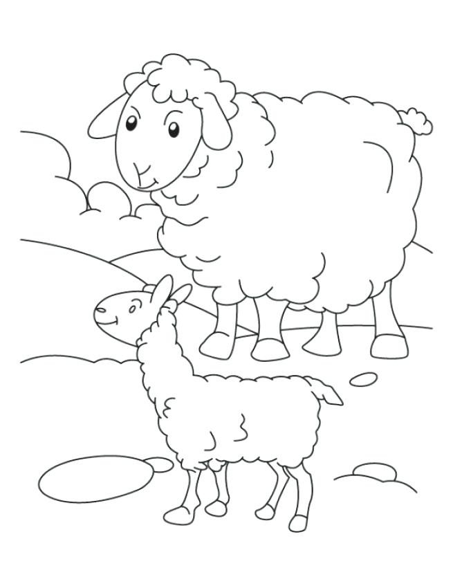 655x847 Sheep Coloring Pages Bighorn Sheep Coloring Pages