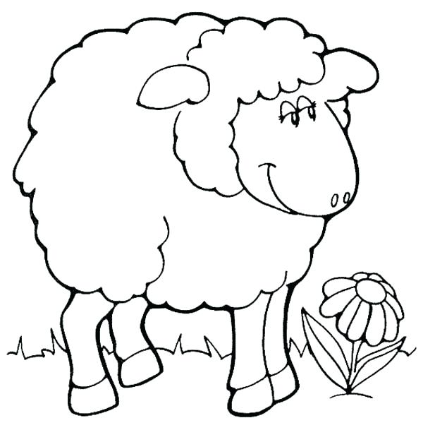 600x626 Sheep Coloring Pages The Sheep Image Coloring Page Bighorn Sheep