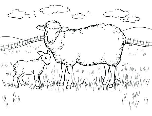 600x461 Bighorn Sheep Coloring Pages Download Or Print These Amazing Sheep