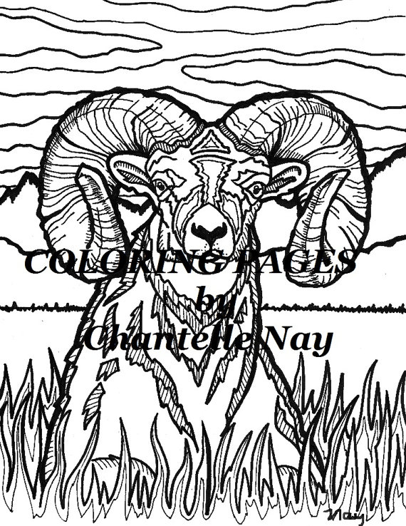570x738 Bighorn Sheep Coloring Page Adult Coloring Picture Animals