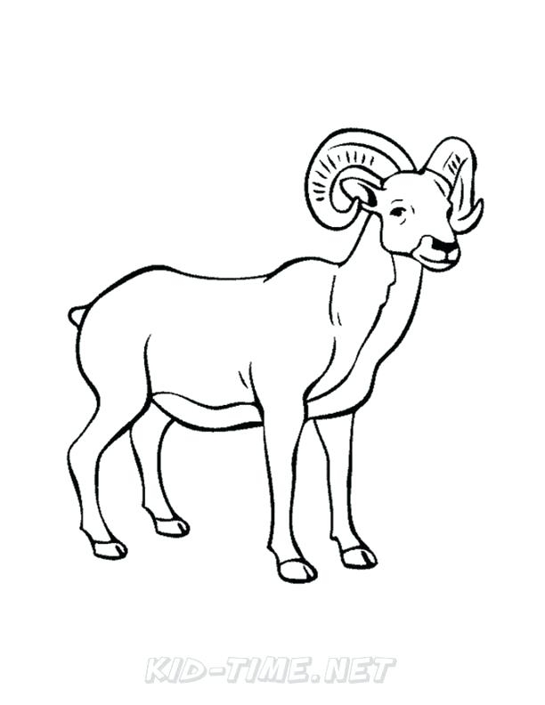 612x792 Bighorn Sheep Ram Coloring Pages Kids Time Free Coloring Bighorn