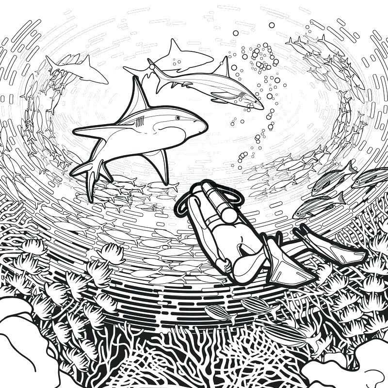800x800 Biology Coloring Pages Marine Biology Coloring Book Together