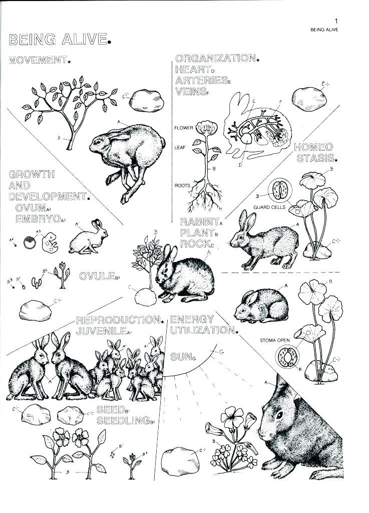 737x1024 Human Cell Coloring Page Cell Coloring Pages Biology Coloring