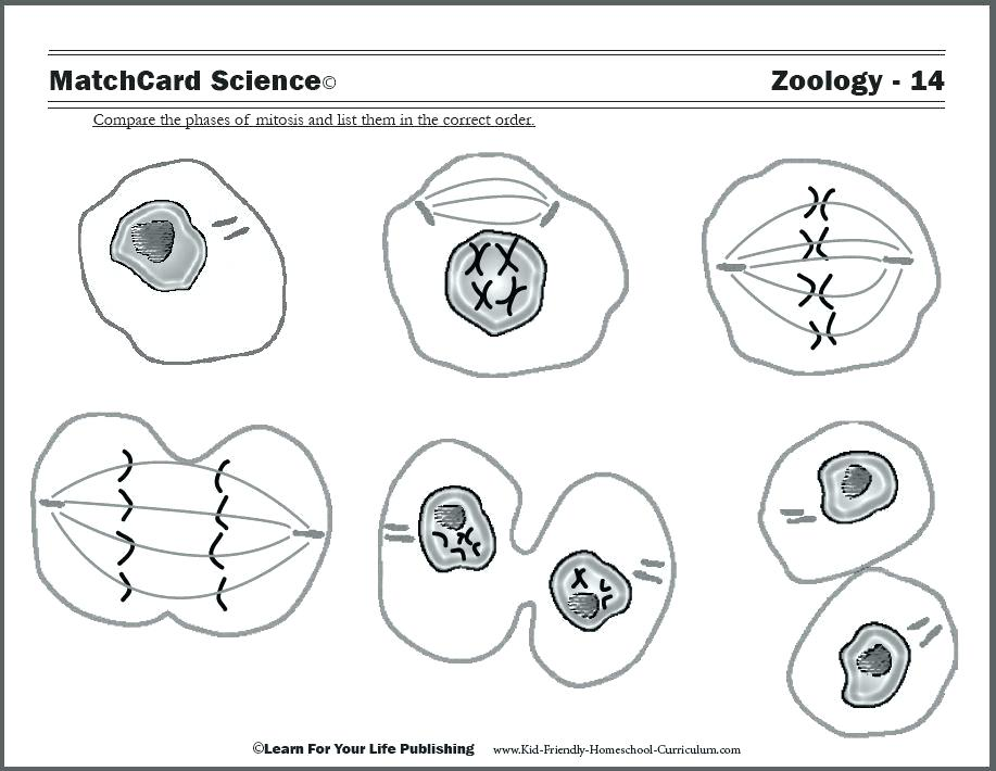 917x710 Human Cell Coloring Page Human Cell Coloring Page Human Cell
