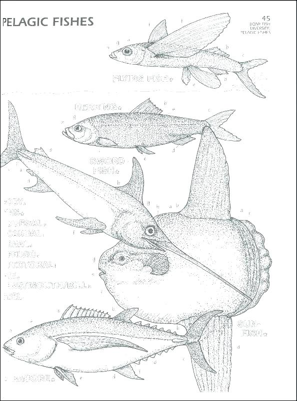594x800 Marine Coloring Page Marine Coloring Page Flying Fish Coloring