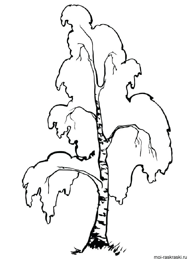 Birch Tree Coloring Page