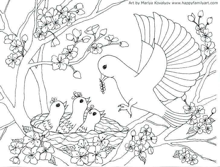 728x554 Coloring Page Of Birds Coloring Pages Birds Baby Bird Coloring