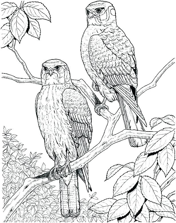 616x780 Coloring Page Of Birds S S S S Humming Coloring Page Bird Cage