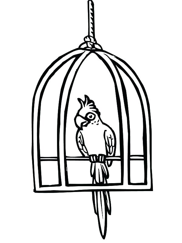 600x800 Cute Bird Cages Parrot Cute Bird Cage Coloring Pages Cute Pet Bird