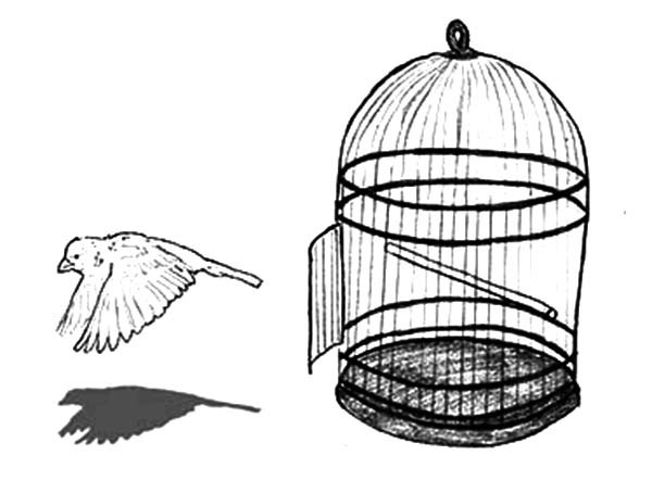 600x454 Escaping Bird Cage Coloring Pages Best Place To Color