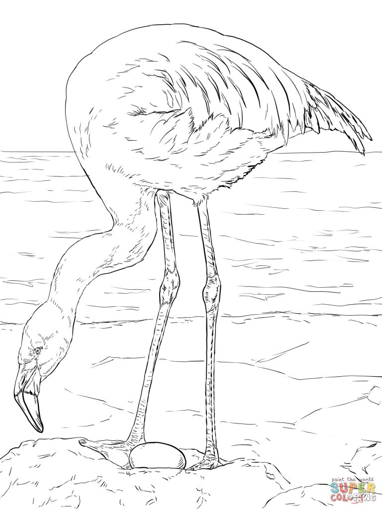 768x1024 Coloring For Kids Unique Flamingo Pages Vector Of Cartoon Running