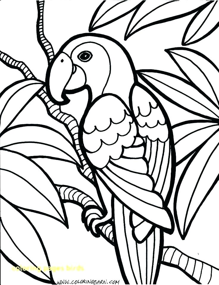 736x957 Coloring Birds Coloring Pages Birds Free Coloring Pages Birds Bird