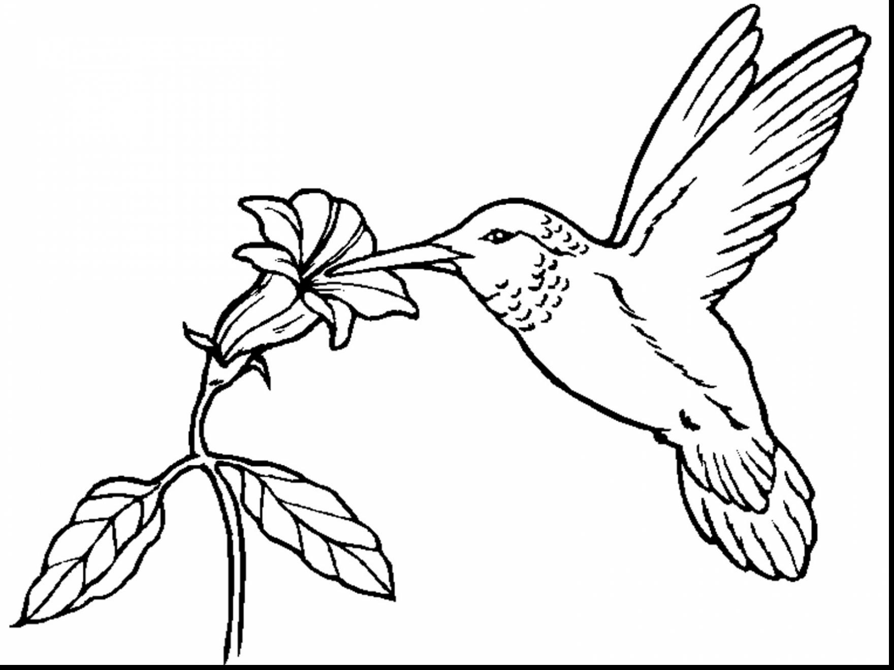 1760x1320 Hummingbird Coloring Pages