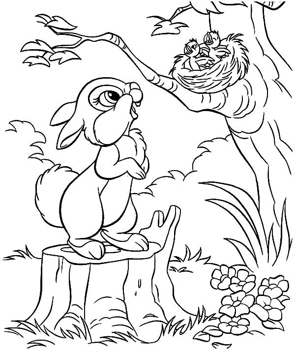 600x718 Little Rabbit Saw Bird Nest And Baby Bird Coloring Pages Best