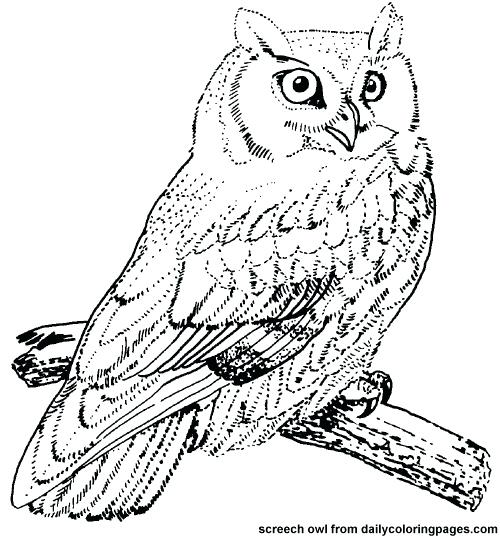 500x538 Realistic Bird Coloring Pages Bird Coloring Pages Photo Of Gallery