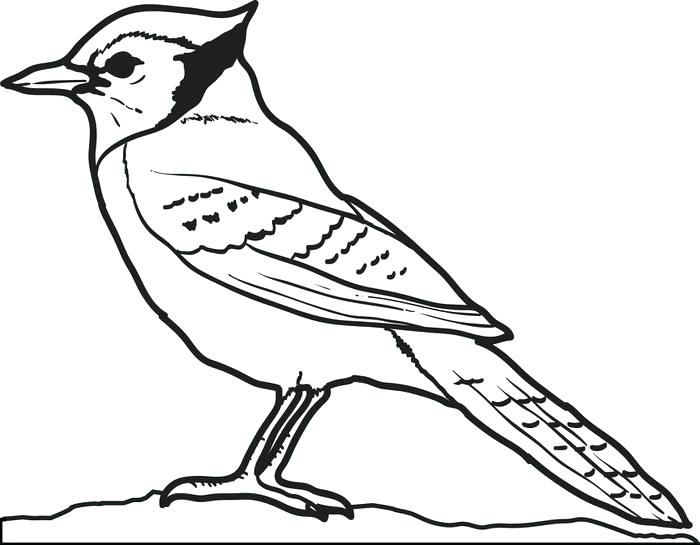 Bird Coloring Pages at GetDrawings.com   Free for personal use Bird ...