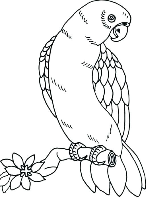 580x698 Bird Coloring Pages Cardinal Bird Coloring Page Free Pages Baby