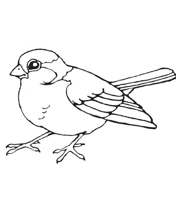 600x750 Bird Coloring Pages Little Bird Coloring Page Bird Coloring Pages