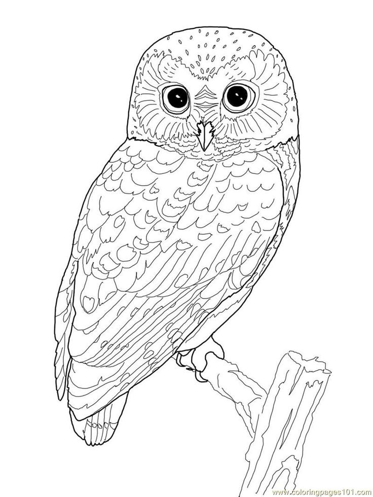 736x980 Best Coloring Pages Images On Coloring Books
