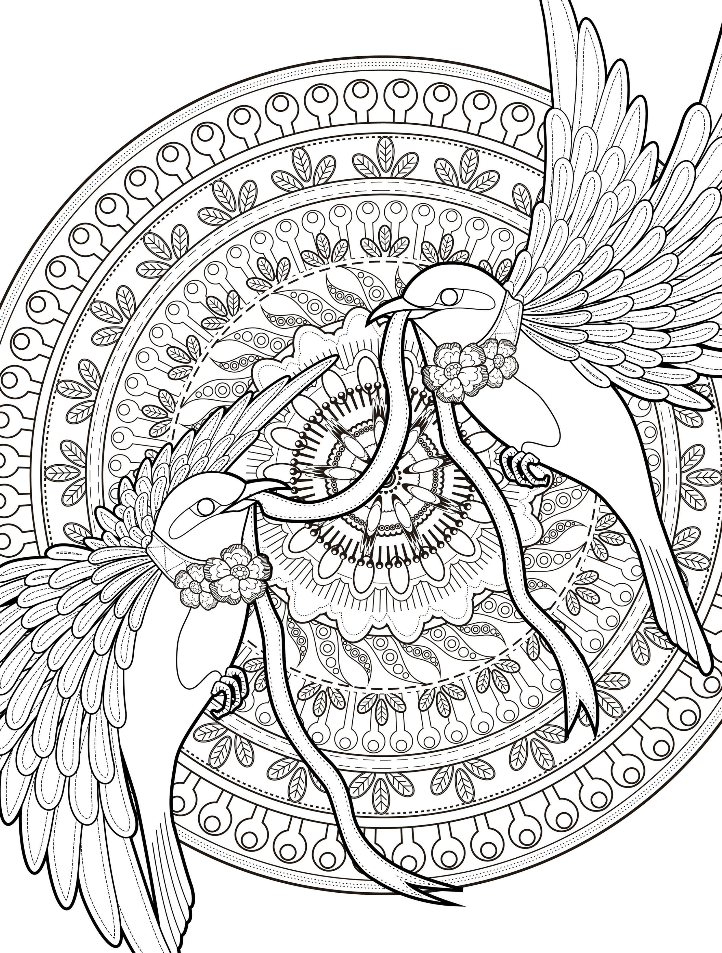 2500x3300 Bird Coloring Pages For Adults