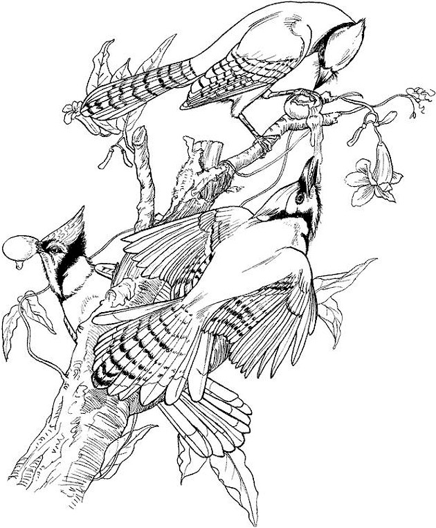 630x763 Bird Coloring Pages Adults Picture Bird Coloring Pages
